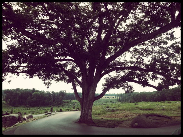 Tree That Survived Gettysburg